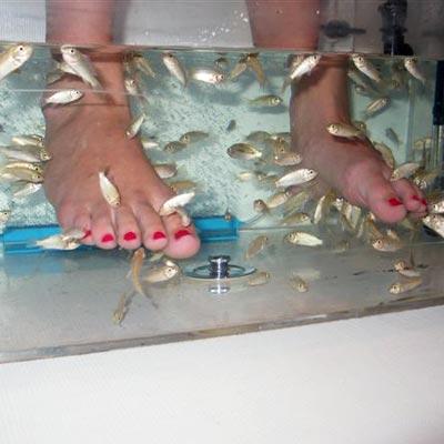 flesh-eating fish pedicure